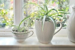 best-plants-indoor-chlorophytum-comosum_ada596f9a675256f7ca6fc0f1eeddced_3x2_jpg_570x380_q85